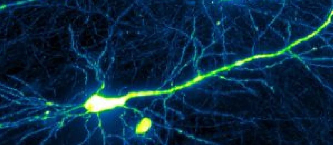 Biophotonics Image