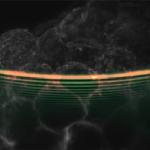 Light Sheet Microscopy Image